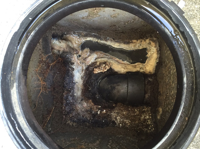 排水桝の詰まりは生活排水だけでなく、木の根っ子も原因となる